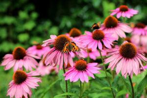 Roze en paarse planten box